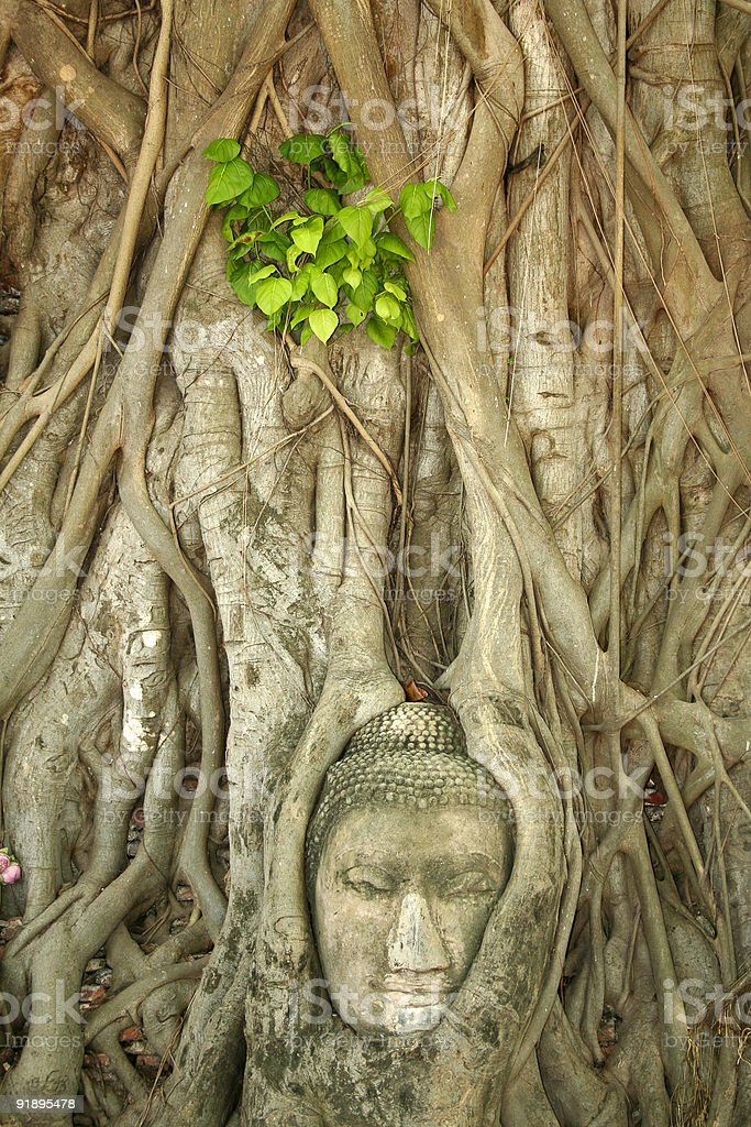 buddhas head banyan tree ayuthaya thailand royalty-free stock photo