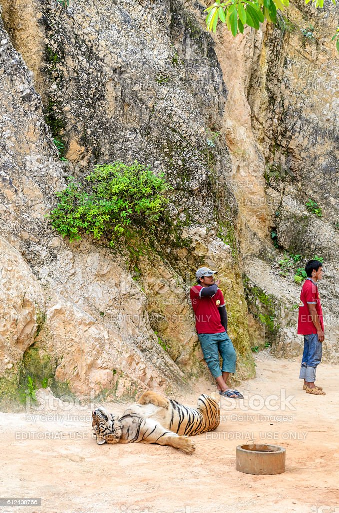 Buddhist Tiger Temple in Kanchanaburi. stock photo