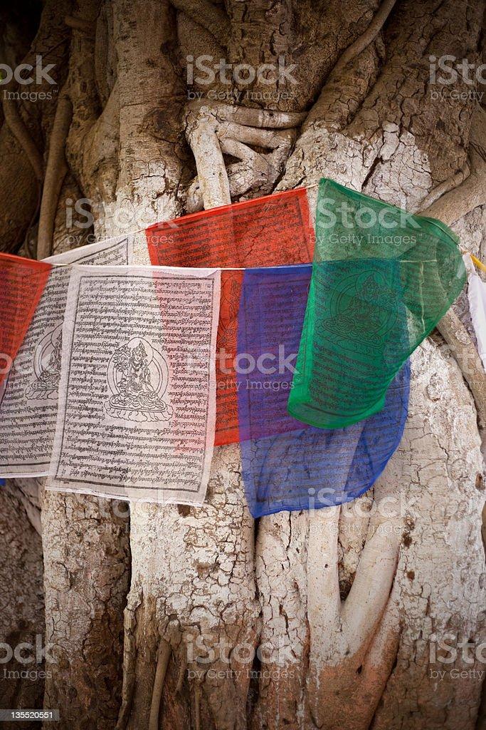 Buddhist Tree stock photo