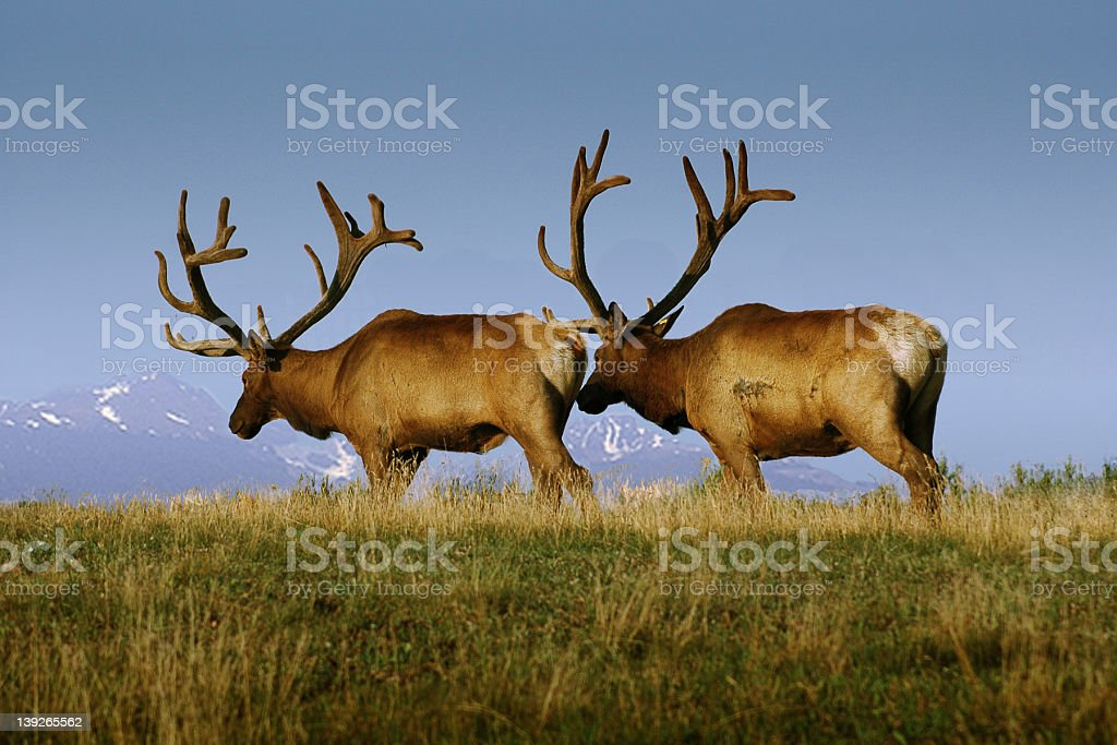Buddys royalty-free stock photo