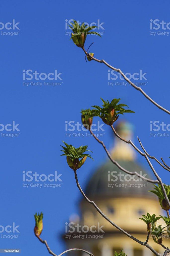 Budding branches stock photo