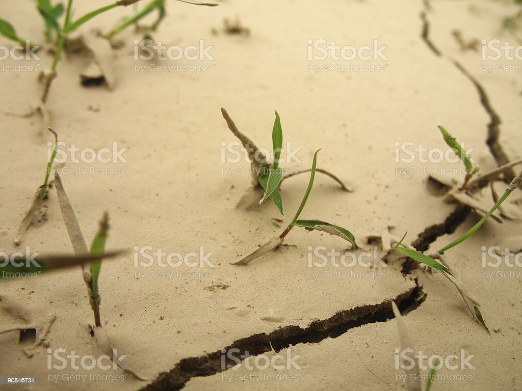 Budding of Grass royalty-free stock photo