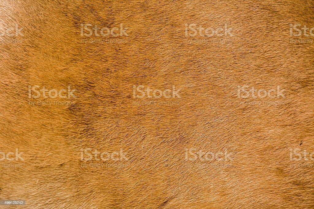 buffalo cow skin background texture stock photo
