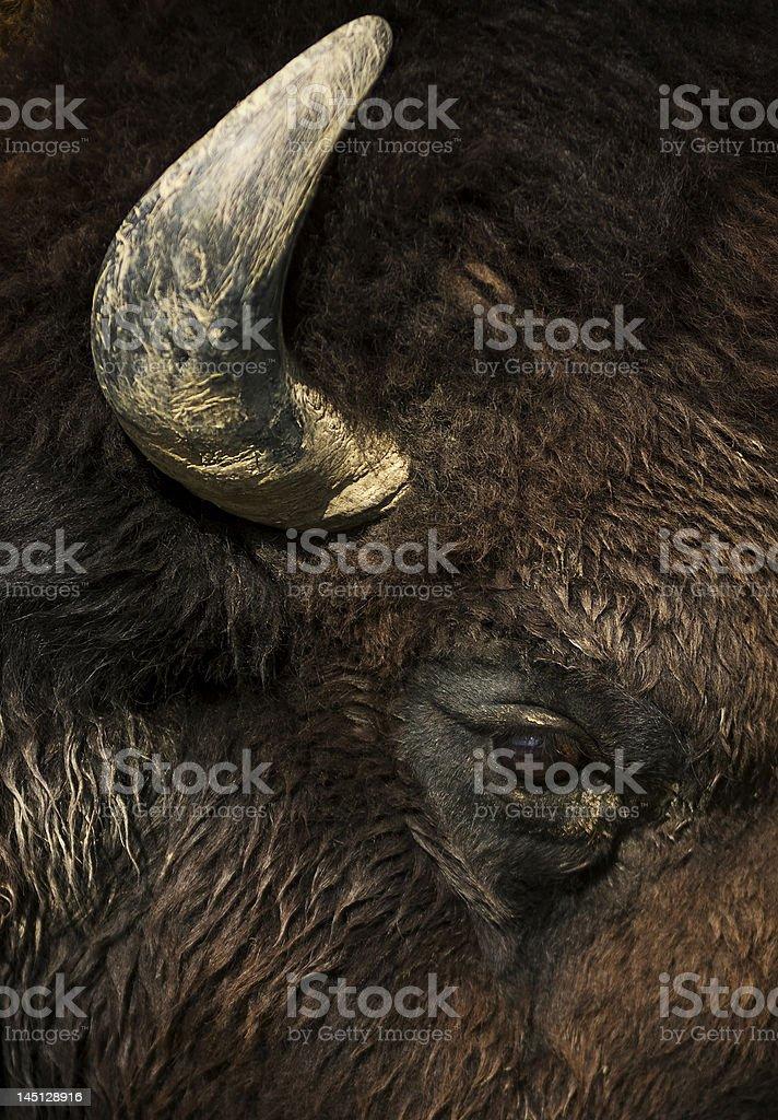 Buffalo Eye and Horn stock photo