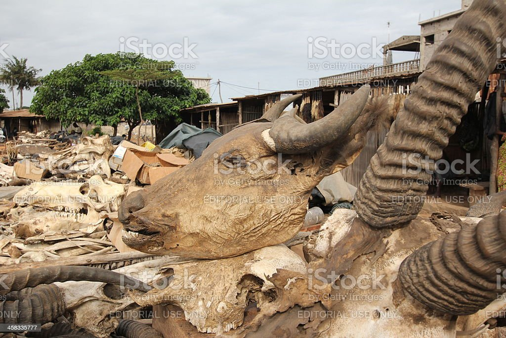 Buffalo Head at the Voodoo Fetish Market in Lomé, Togo stock photo
