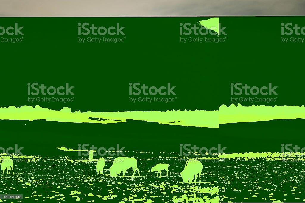 Buffalo in Open Plains royalty-free stock photo