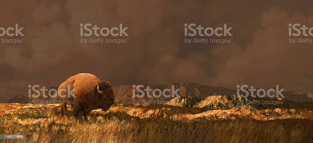 Buffalo in Wyoming royalty-free stock photo