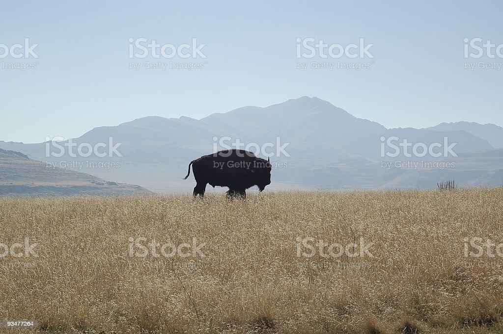 Buffalo Silhouette stock photo