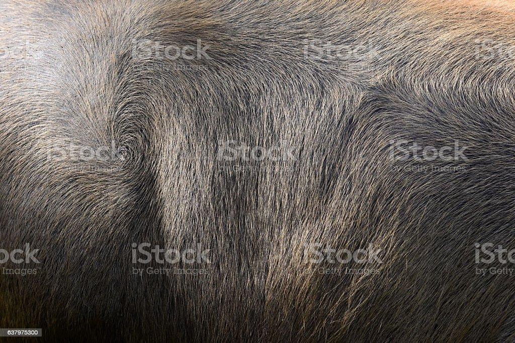 Buffalo skin texture background stock photo