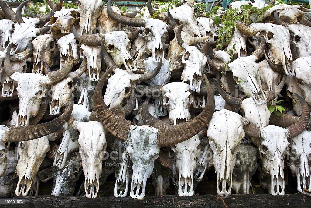 Buffalo skull 7 royalty-free stock photo