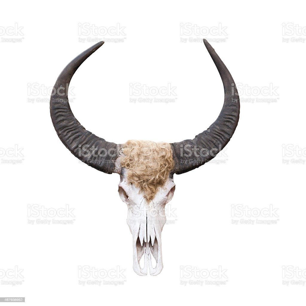 Buffalo skull isolated on white . stock photo