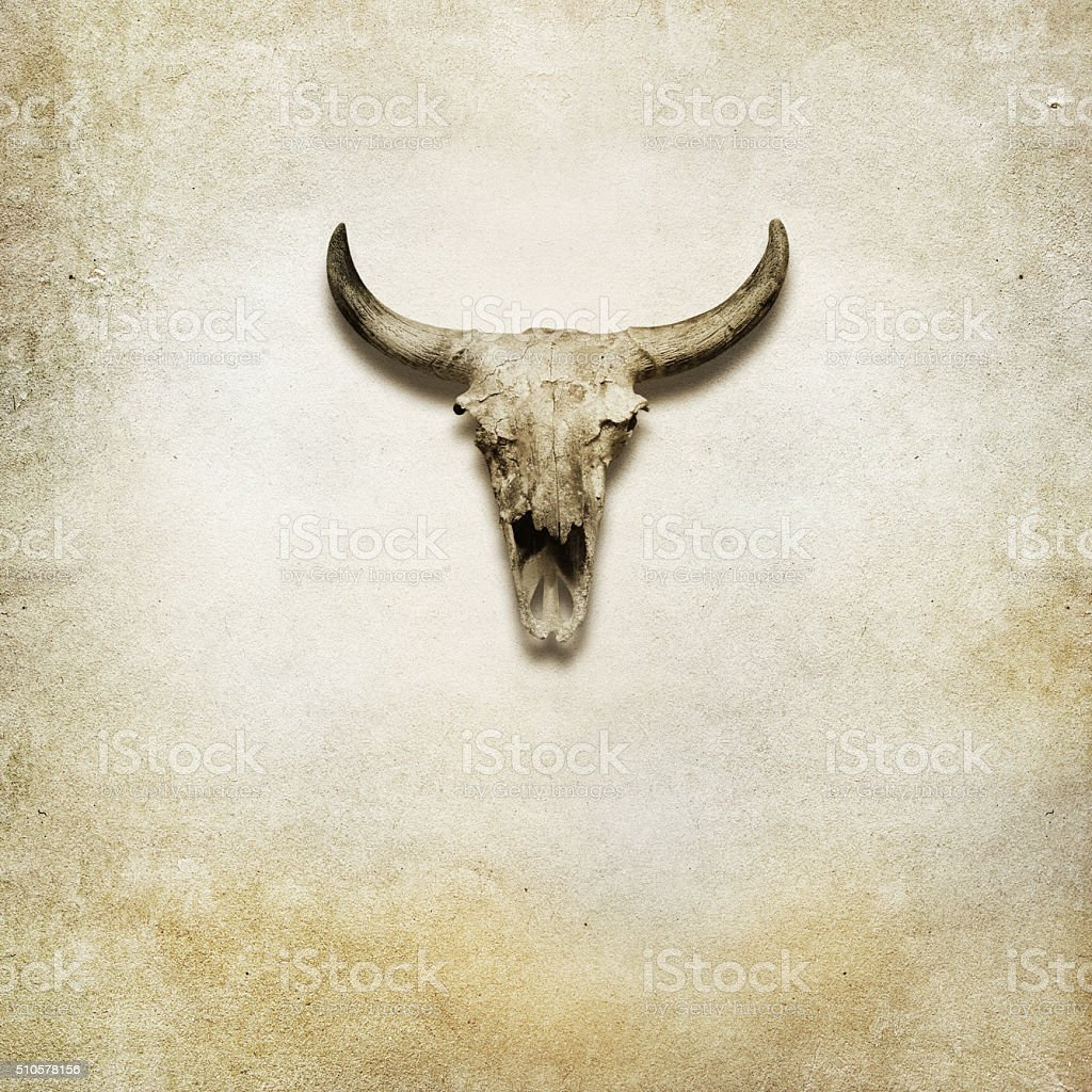 buffalo skull on brown paper background stock photo