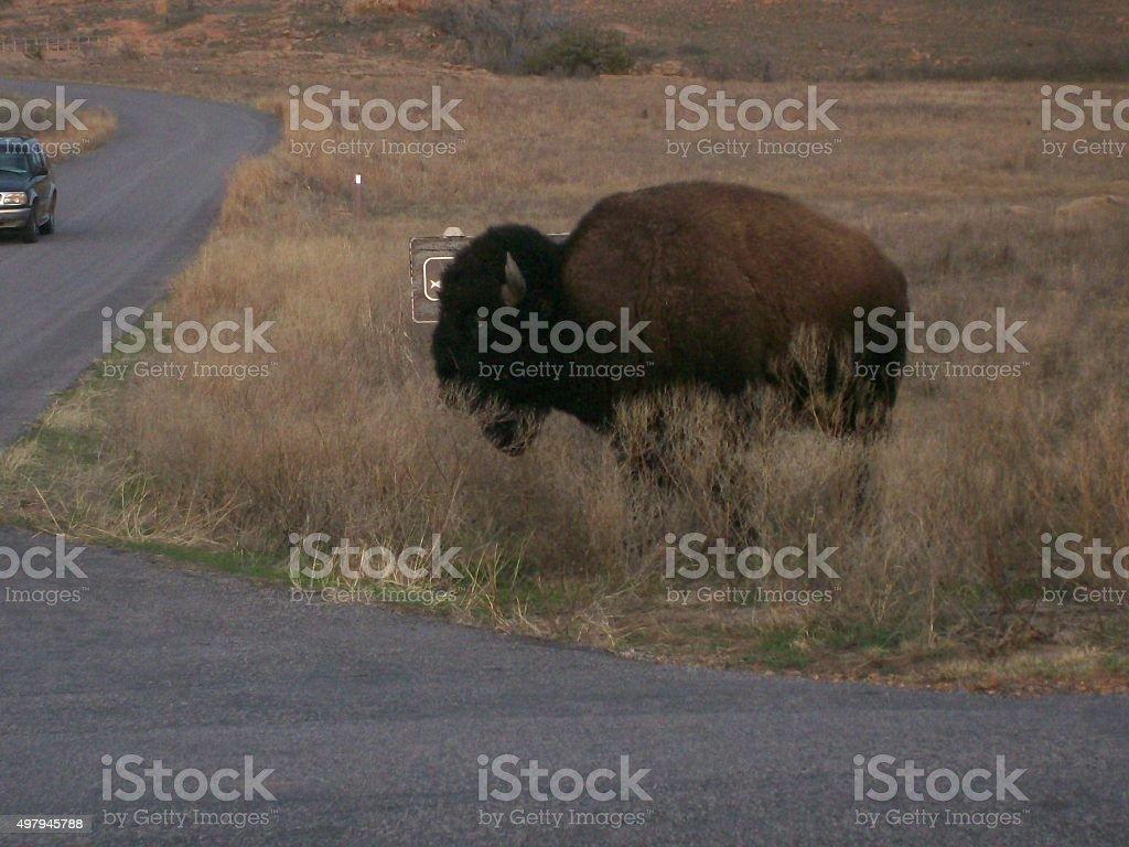 Buffalo stop sign stock photo