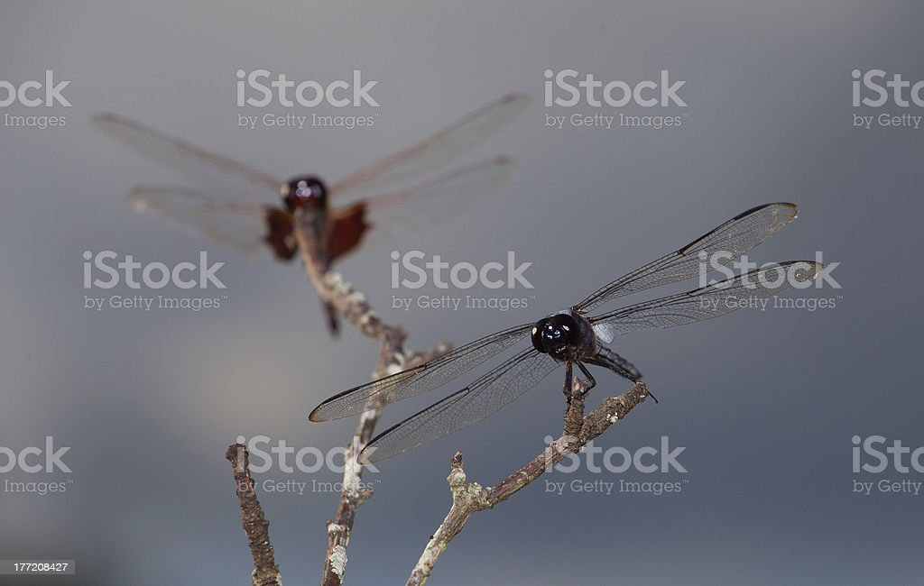 Bug danger zone royalty-free stock photo