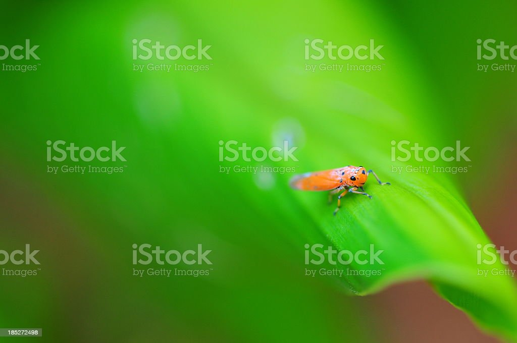 Bug  in green nature background royalty-free stock photo