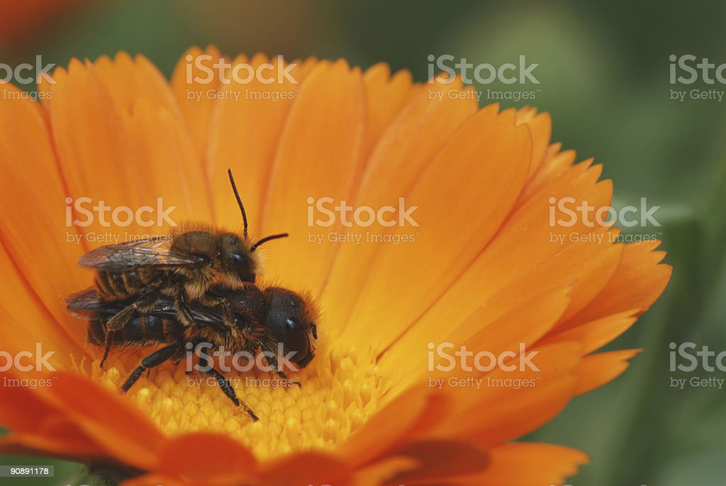 Bug Love stock photo
