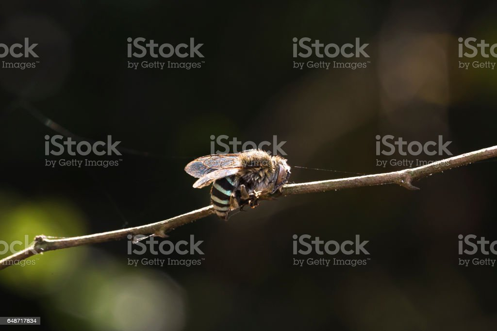 bug on a dry tree stock photo