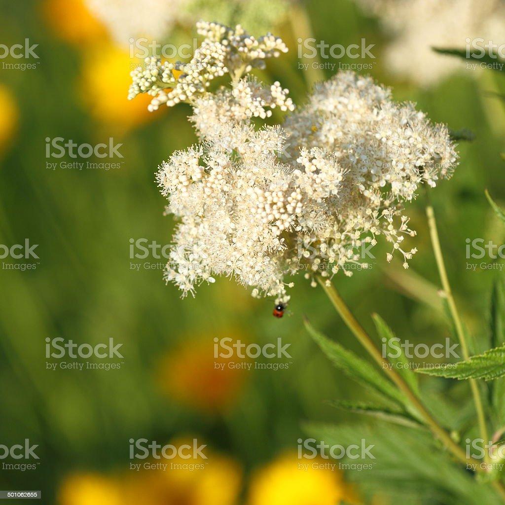 Bug sur une fleur. photo libre de droits