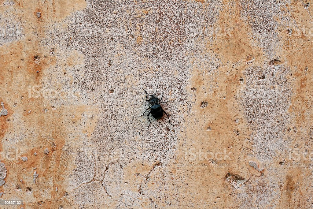 Bug on a roman wall royalty-free stock photo