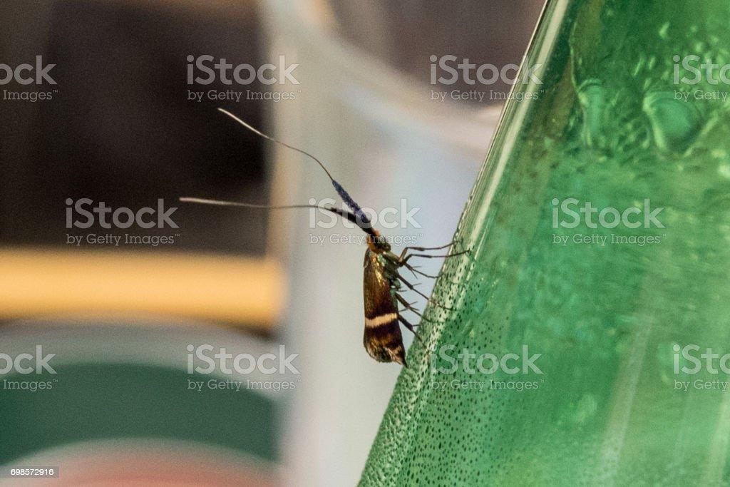 Bug on Bottle stock photo