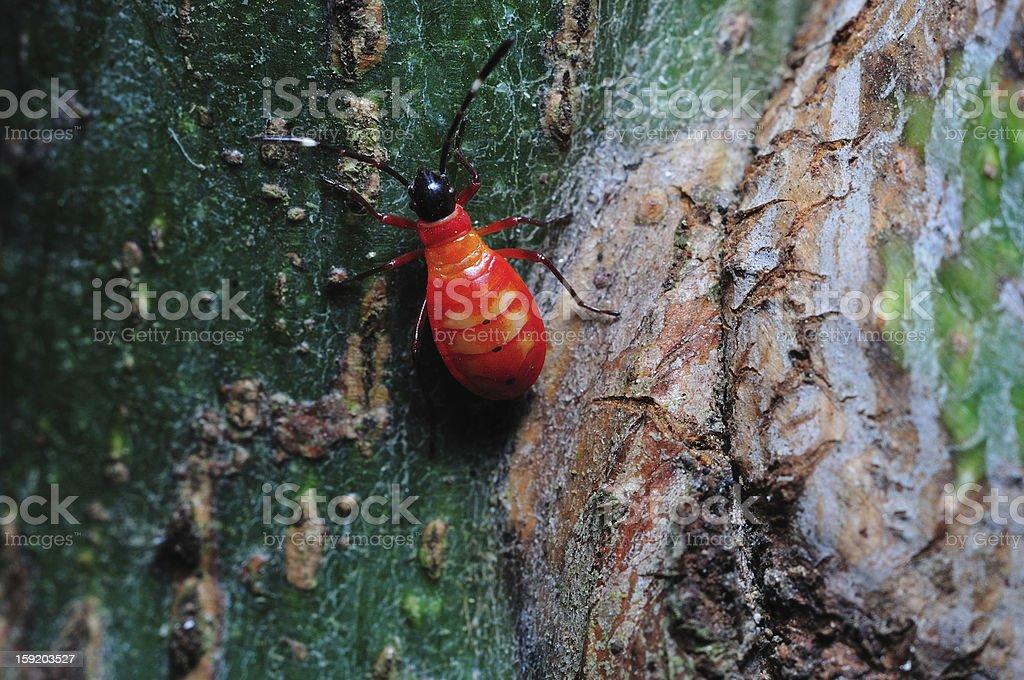 Bug on tree royalty-free stock photo