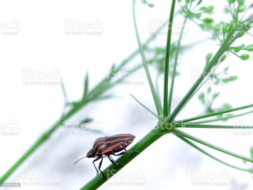 Bug over a stem royalty-free stock photo