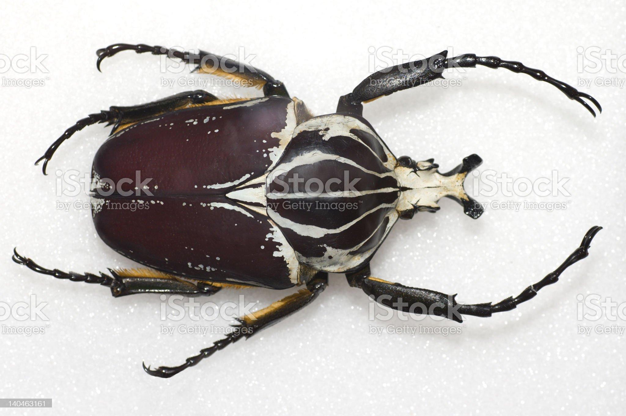Bug royalty-free stock photo