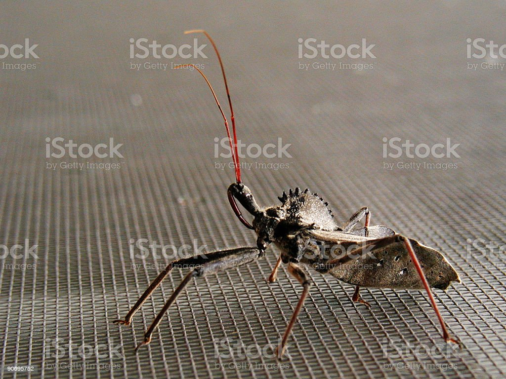 Bug! stock photo
