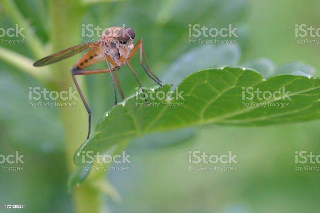 Bug resting royalty-free stock photo