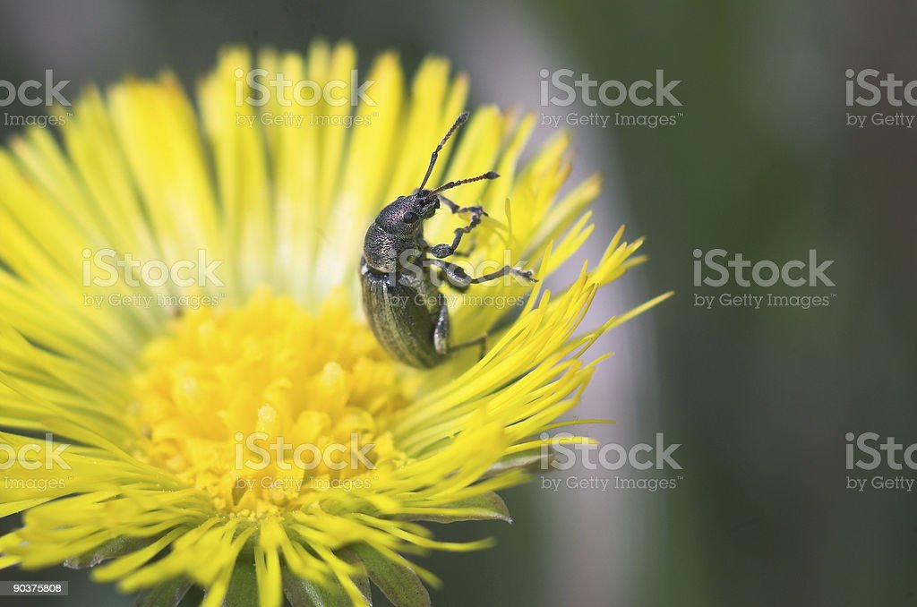 Bug's life royalty-free stock photo
