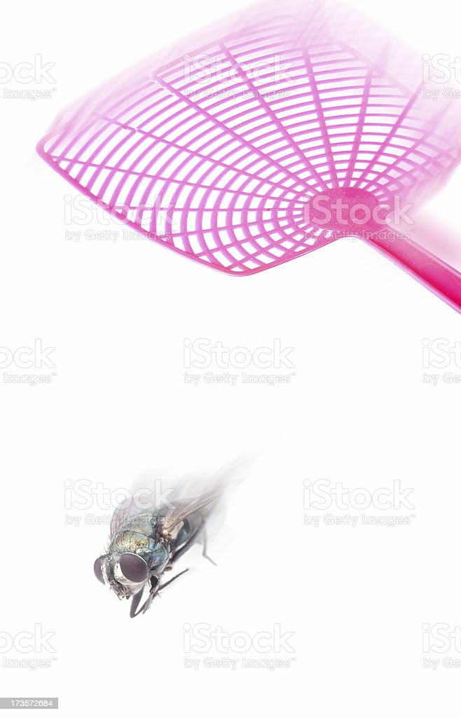 bugs last day royalty-free stock photo