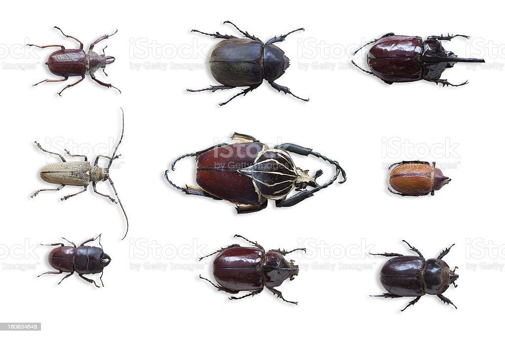bugs stock photo