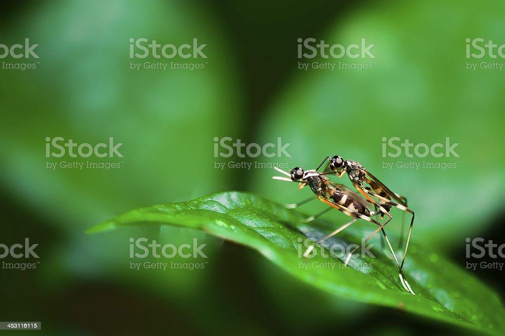 bugs royalty-free stock photo