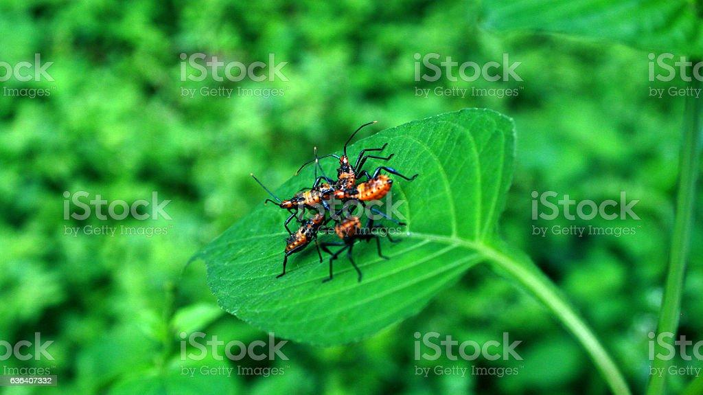 Bugs Reunion stock photo