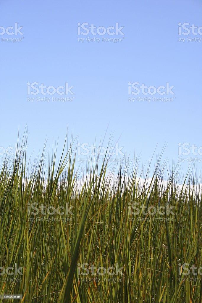 Bug de vue de l'herbe photo libre de droits
