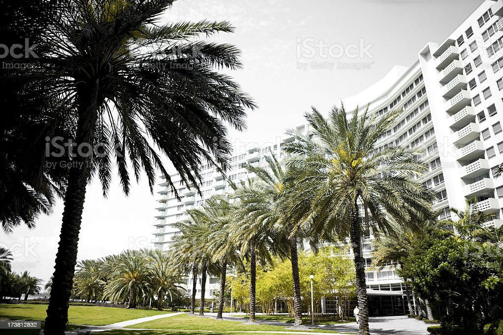 Building and palm trees royalty-free stock photo