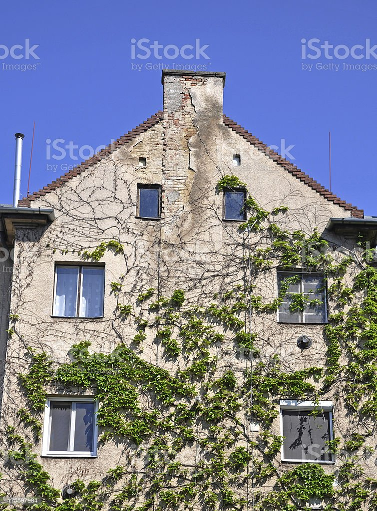 building facade with climbing plants royalty-free stock photo