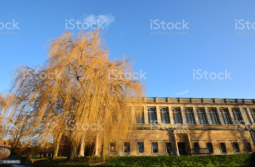 Building with dry trees with blue sky royalty-free stock photo