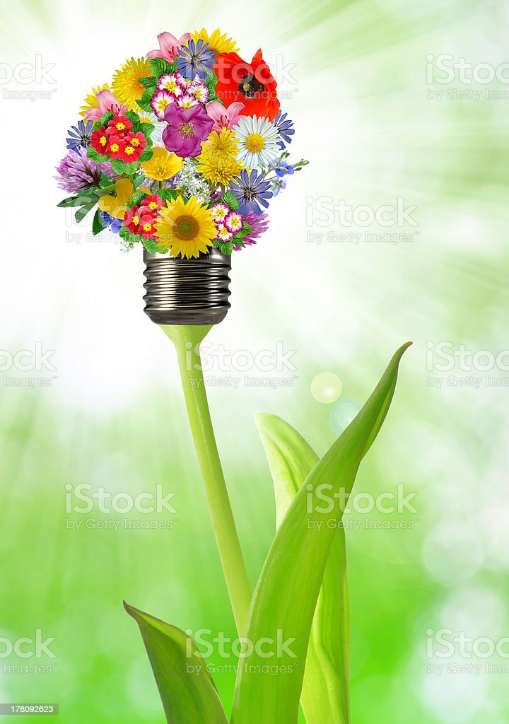 bulb from flowers royalty-free stock photo
