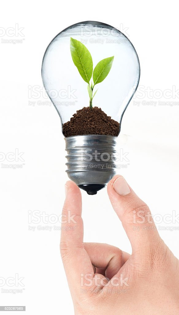 Bulb light with tree inside and hand stock photo