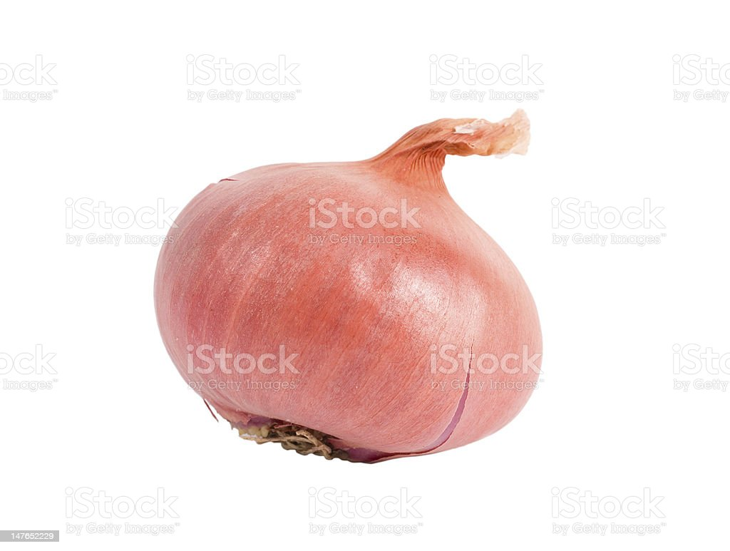Bulb onion stock photo