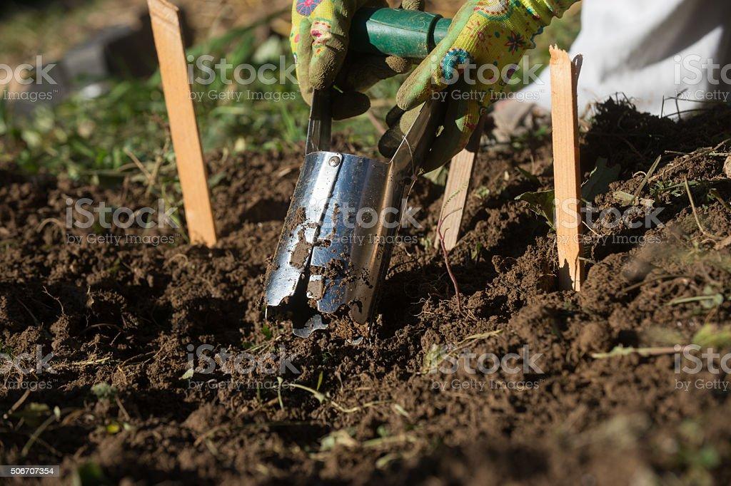 Bulb planter stock photo