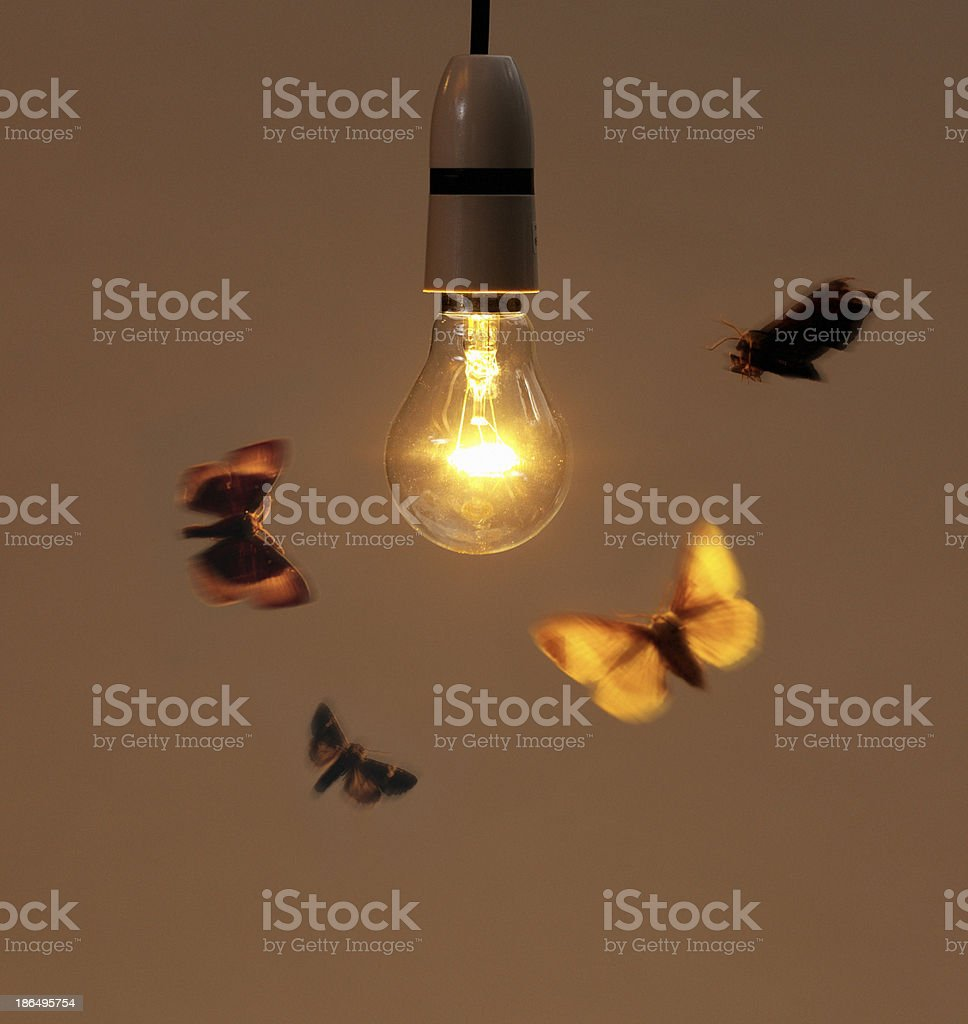 Bulb with moth stock photo