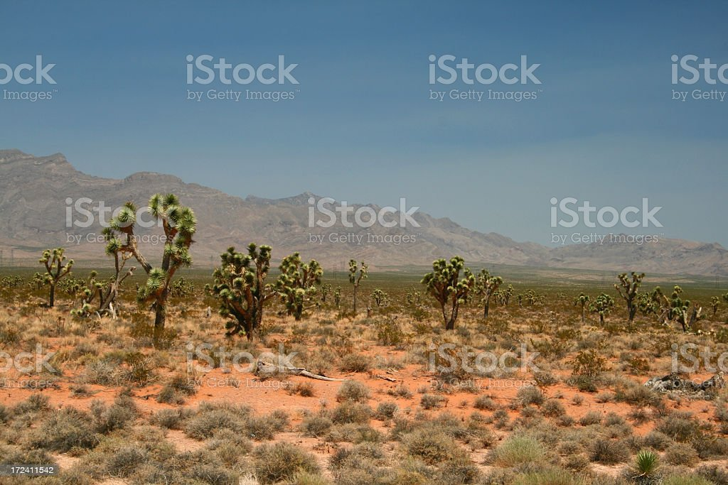 Bulbous cacti and hills in distance of Mojave stock photo