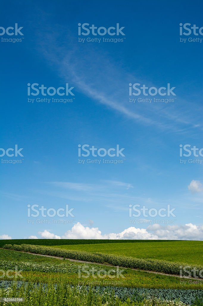 bule sky of summer and greeneryfieldpatch stock photo