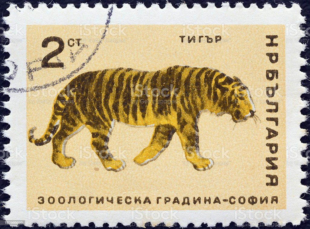 Bulgaria stamp shows a Tiger (1966) royalty-free stock photo