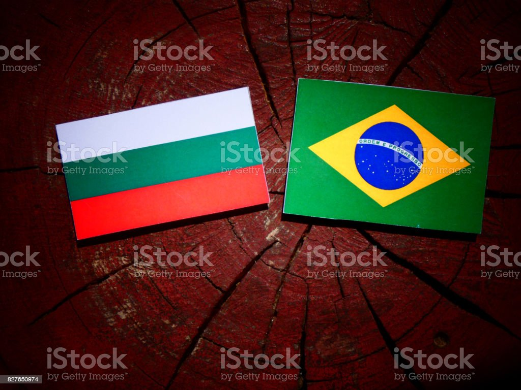 Bulgarian flag with Brazilian flag on a tree stump isolated stock photo
