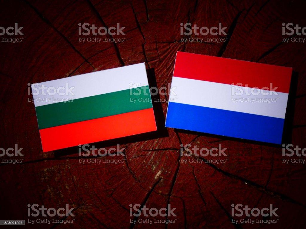 Bulgarian flag with Dutch flag on a tree stump isolated stock photo