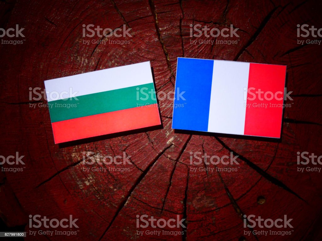 Bulgarian flag with French flag on a tree stump isolated stock photo
