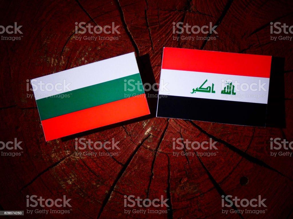Bulgarian flag with Iraqi flag on a tree stump isolated stock photo